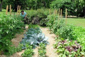 Garden photos 001